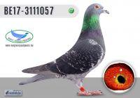 _DSC7640---BE17-3111057