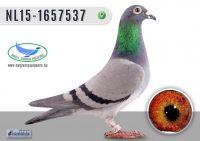_DSC7890---NL15-1657537-T