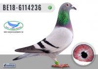 _DSC7903---BE18-6114236-T
