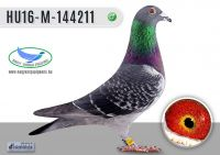 HU16-M-144211-H