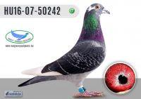 _DSC8215---HU16-07-50242-H